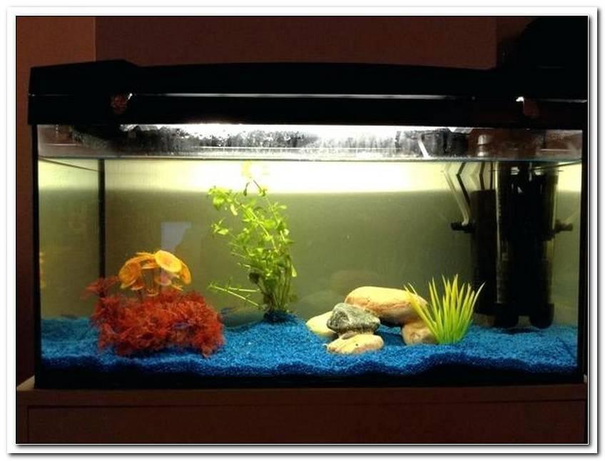 Wie Lange Soll Die Beleuchtung Im Aquarium An Sein