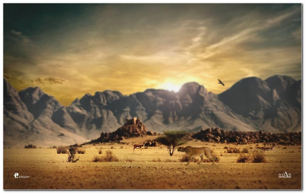 Wild HD Wallpaper