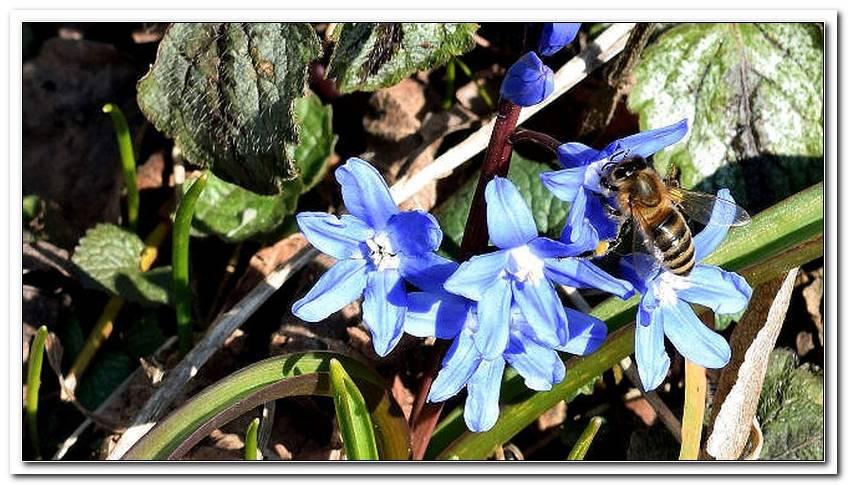 Wildbienen Im Garten Halten