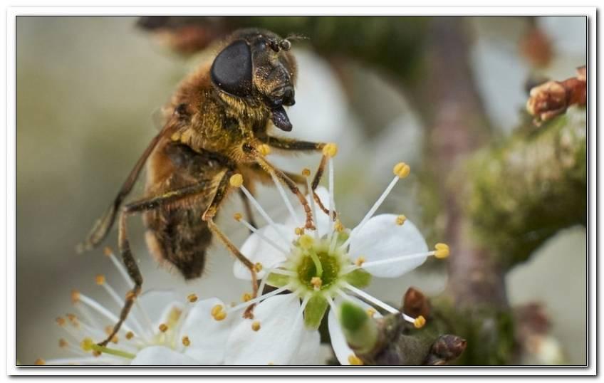 Wildbienen Im Garten Was Tun