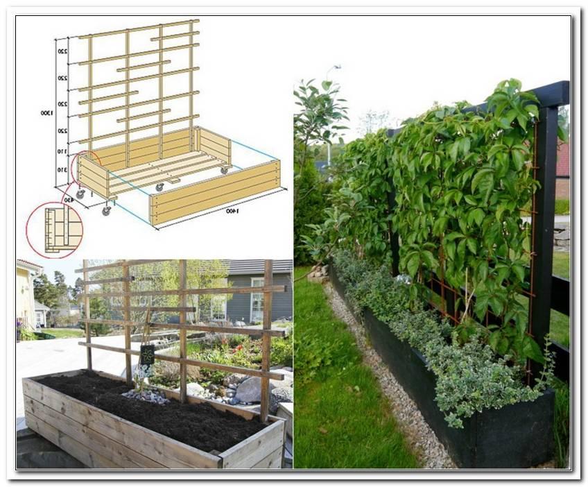 Windschutz Terrasse Pflanzen
