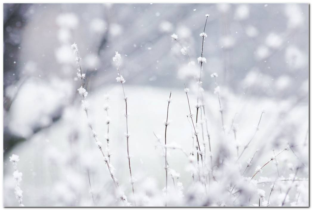 Winter Snow Background White Flower Wallpaper