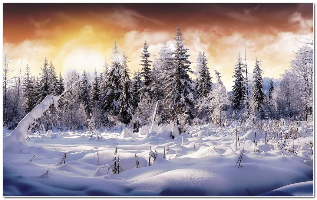 Winter Snow Nature Wallpaper Background Image