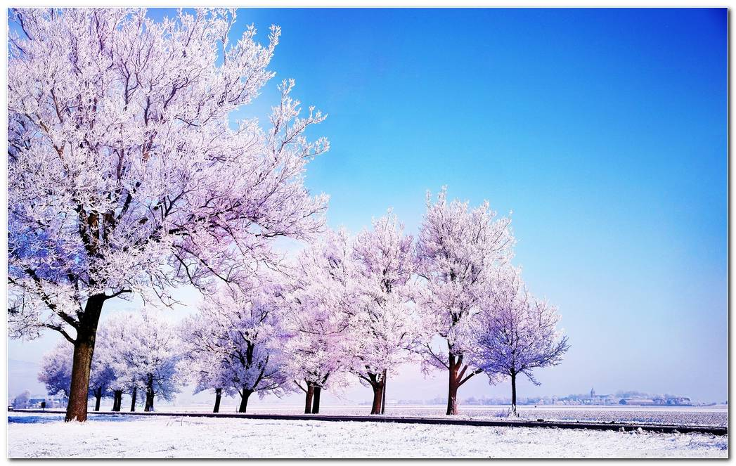 Winter Snow Nature Wallpaper Background Picture Desktop