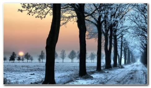 Winter Avenue HD Wallpaper