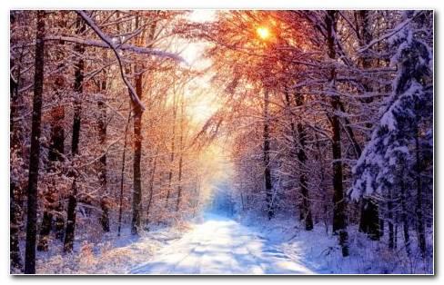 Winter Photography HD Wallpaper