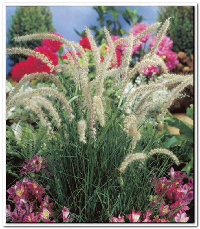 Winterharte Pflanzen F?R Den Garten