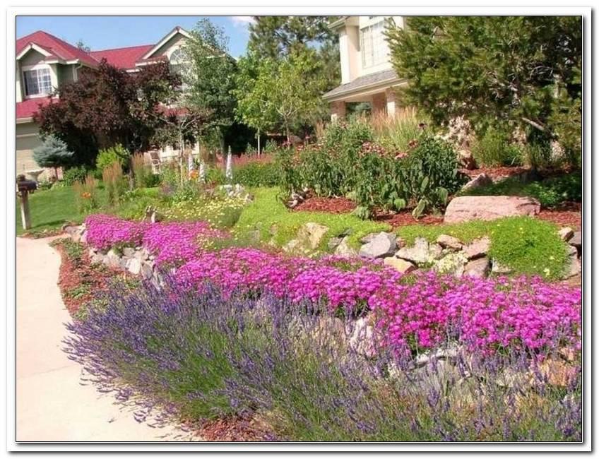 Winterharte Pflanzen F?R Steingarten