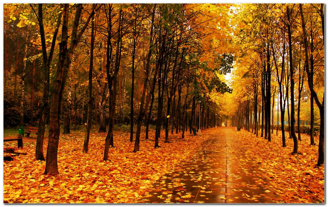 Wonderful Autumn Season Nature Image Wallpaper Background