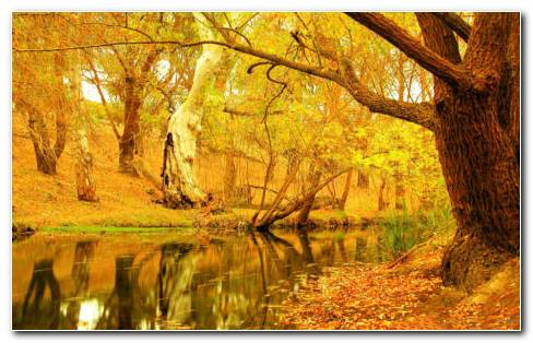 Yellow Autumn Trees HD Wallpaper