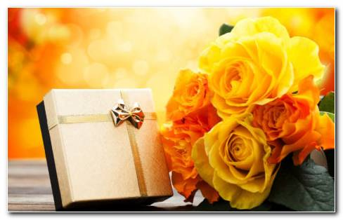 Yellow Rose Gift HD Wallpaper