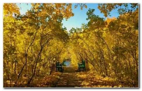 Yellow Park HD Wallpaper