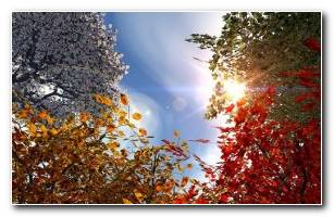 Automne 3d Wallpaper