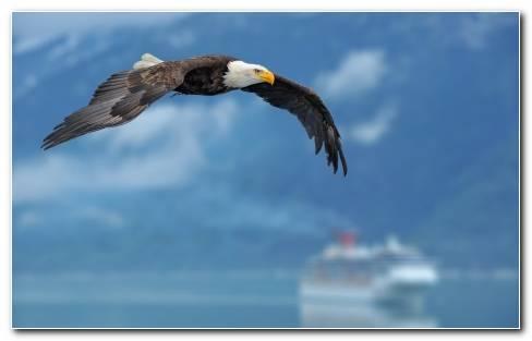 Birds Nature Eagles Wallpaper