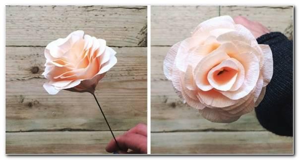 Bonita Rosa Papel Mach 580x300