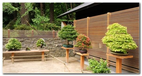 bonsai elegante ambiente natural 580x300