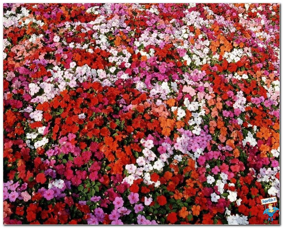 Botanical Gardens 001