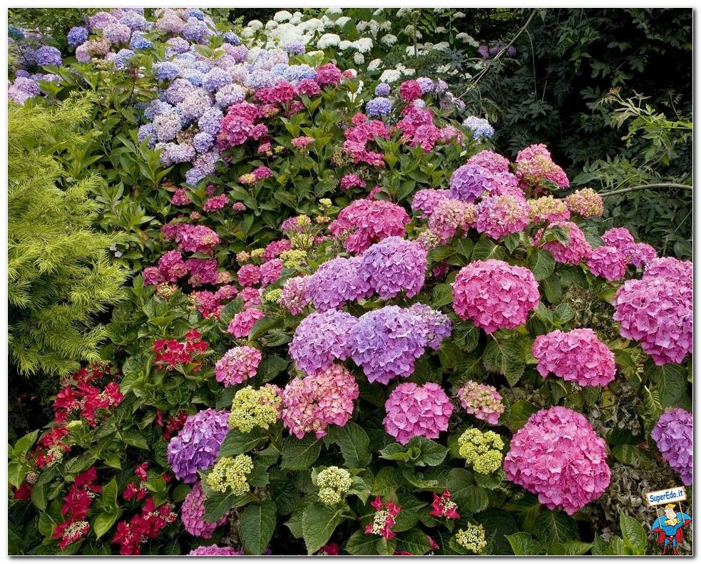 Botanical Gardens 010