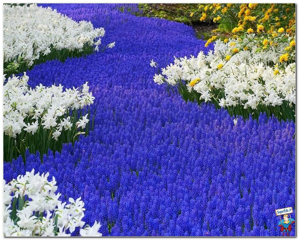 Botanical Gardens 011