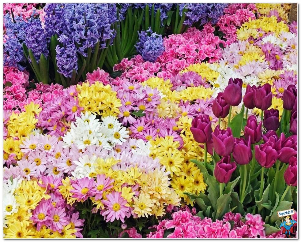 Botanical Gardens 016
