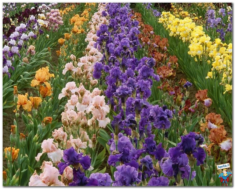 Botanical Gardens 021