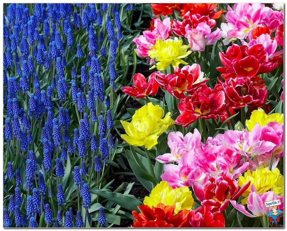 Botanical Gardens 033
