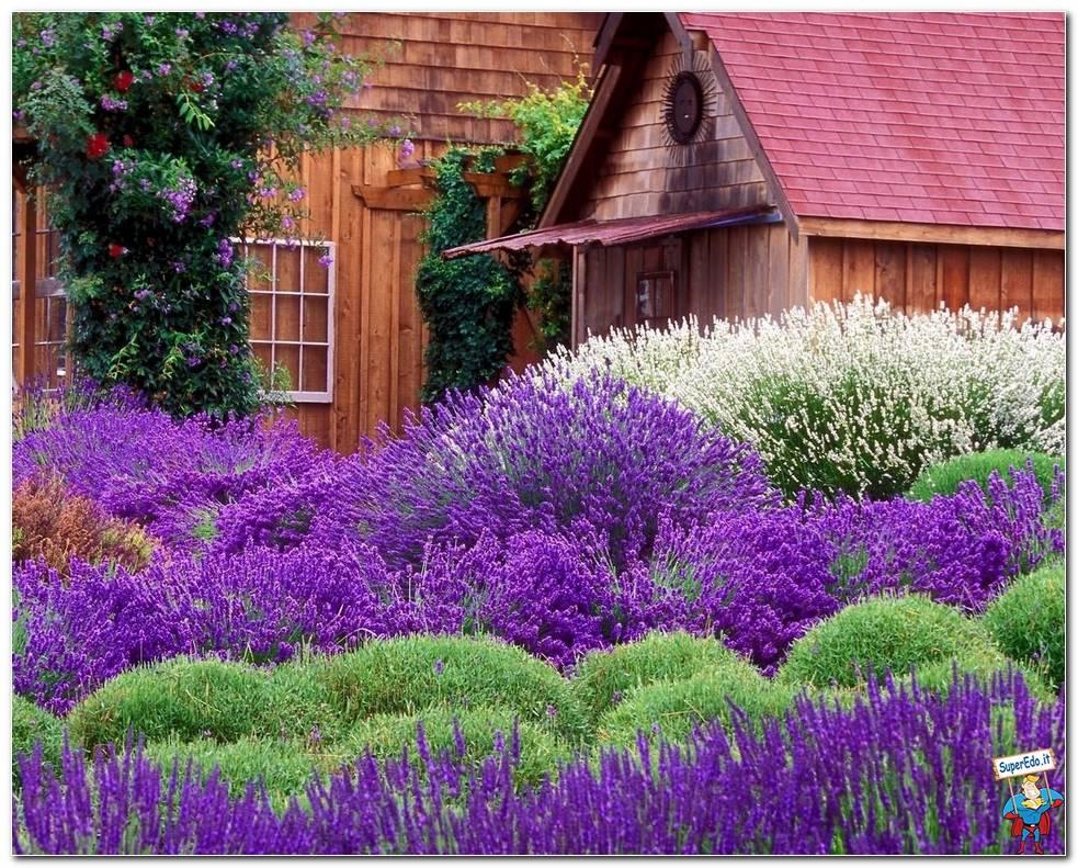 Botanical Gardens 035
