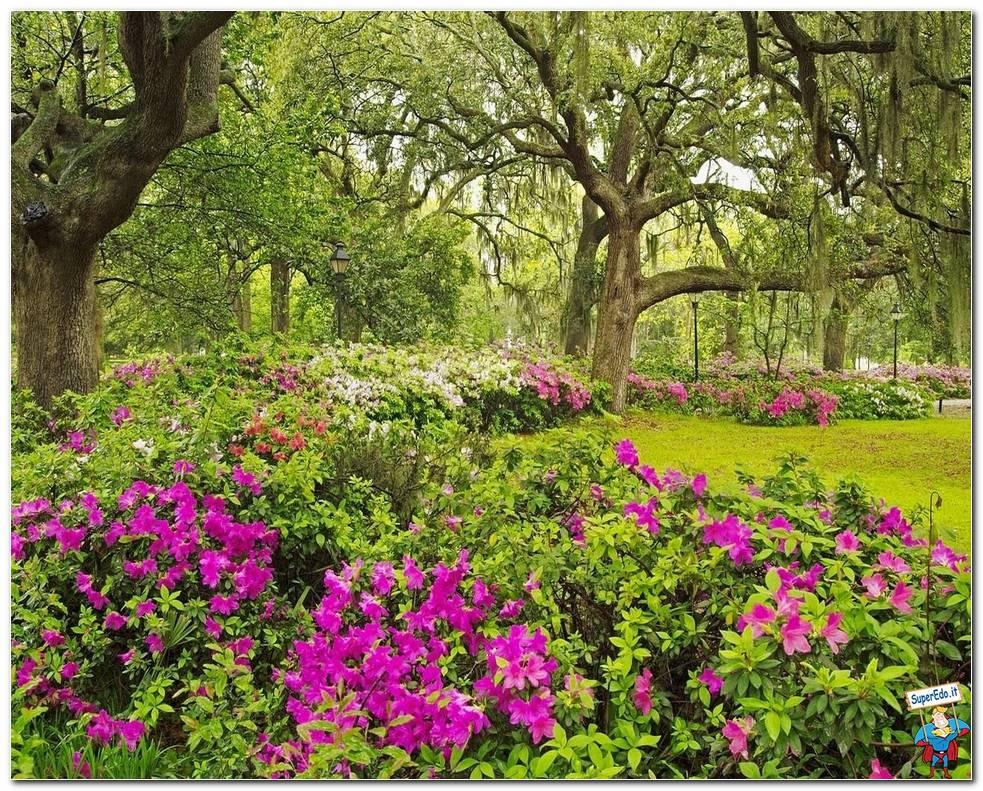 Botanical Gardens 040