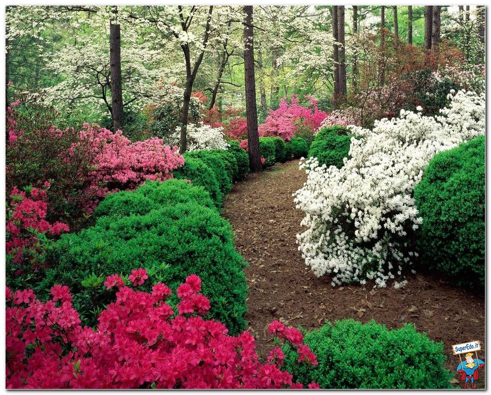 Botanical Gardens 045