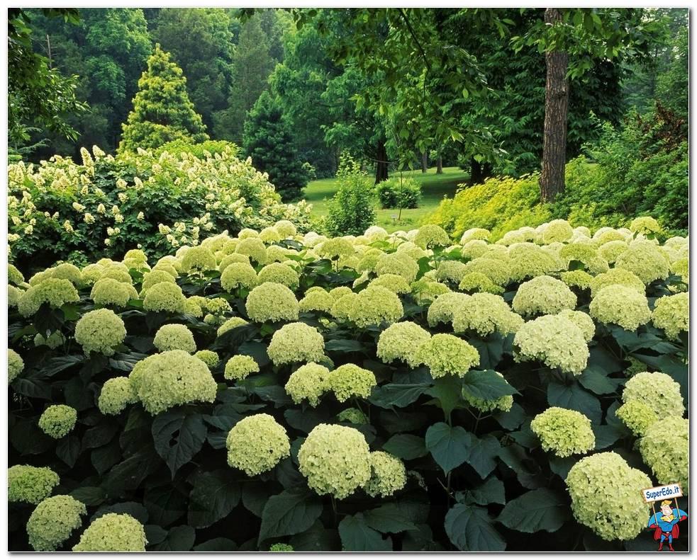 Botanical Gardens 047