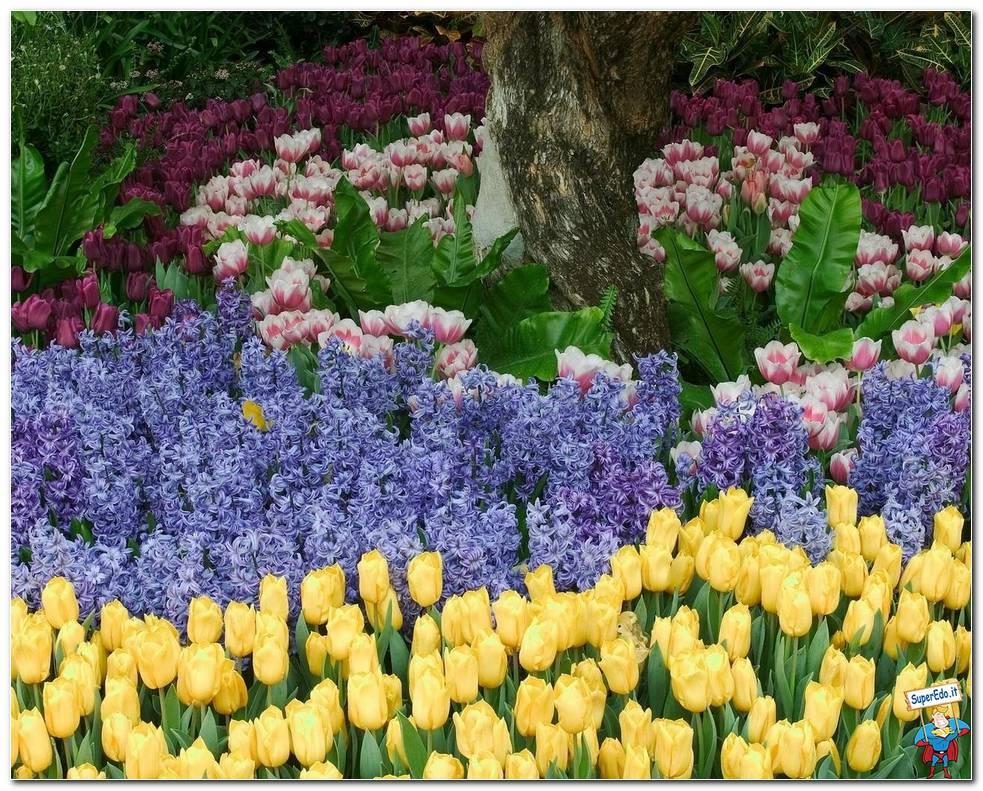 Botanical Gardens 048
