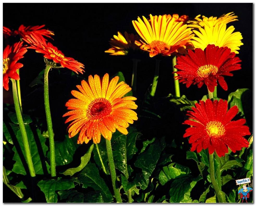 Botanical Gardens 056