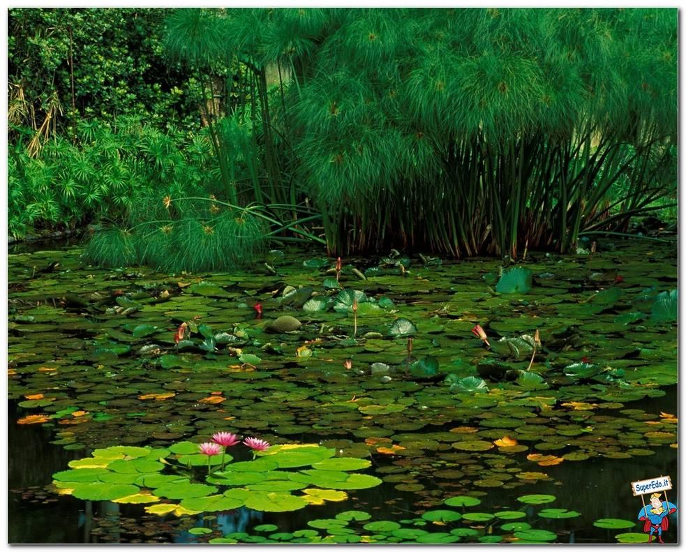Botanical Gardens 069