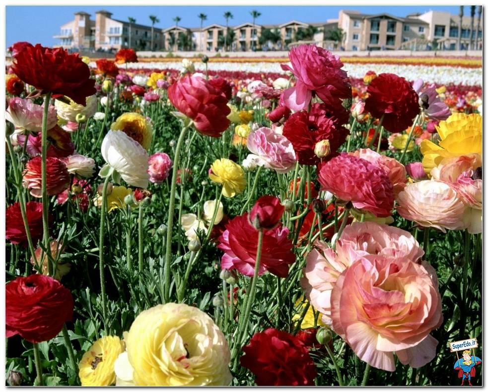 Botanical Gardens 078