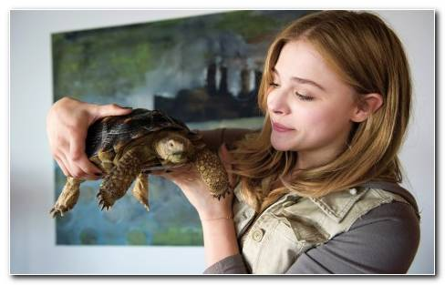 Chloe Moretz In Laggies Wide