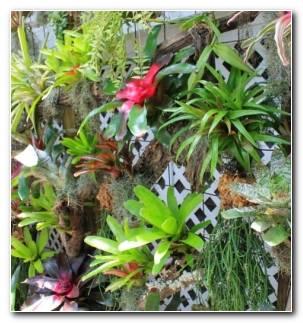Como Hacer Un Jardin Vertical Flores Resized