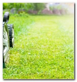Cortadora De Cesped Mantenimiento Cuidado Jardin Resized