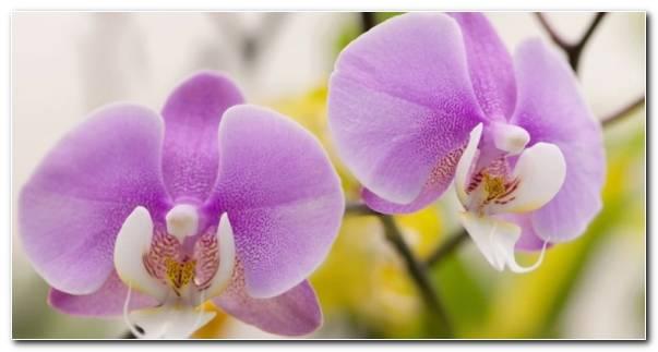 Cuidado De Orquideas Casa Revitalizarlas Resized