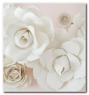 Flores Opciones Decorar Casa Primavera Estilo