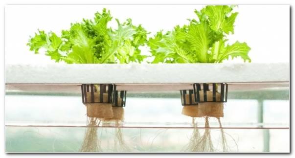 Formas De Cultivo Hidroponicas Plantas Resized