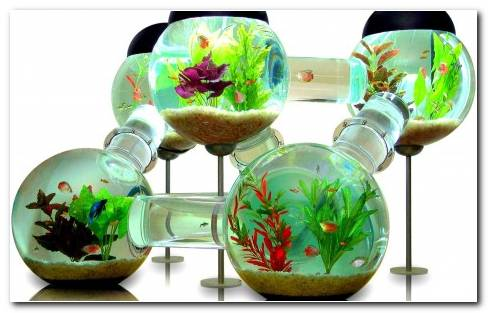Interesting Aquarium Hd Wallpaper