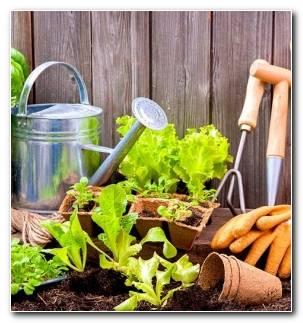 Jardines De Casas Materiales Opciones Estilo