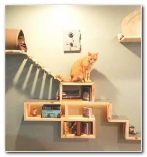 Juegos Para Gatos Estantes