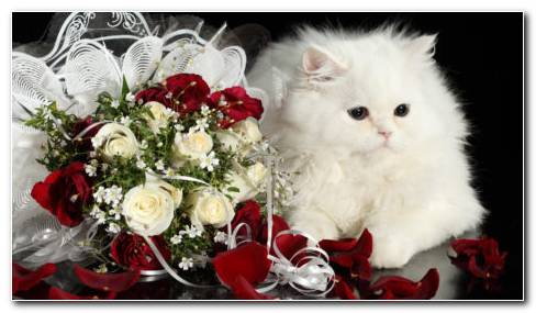 kitten with roses hd wallpaper