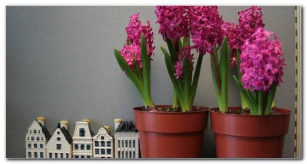 Las Flores Interiores Cuidados Vacaciones Resized