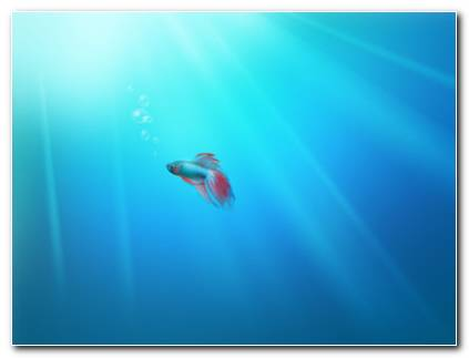Lonely Fish Hd Wallpaper