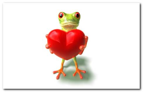 Love Frog Hd Wallpaper
