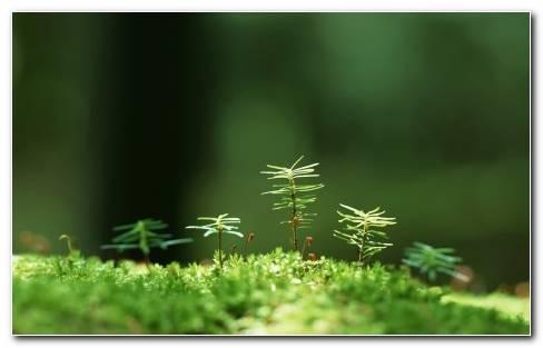 Macro Green Grass
