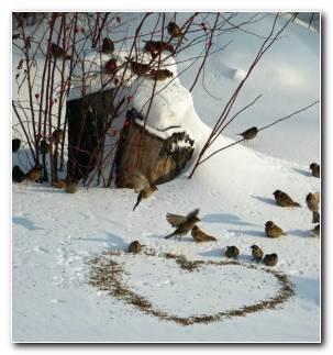 P?jaros Sobre La Nieve