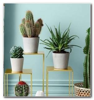 Plantas Suculentas Decorar Casa Opciones